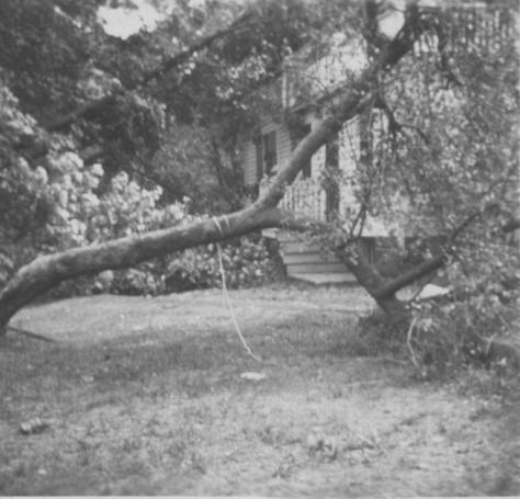 Trumbul house - Maple Tree taken down in Huricane of 1944 (front porch steps