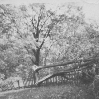 Trumbul house - Maple tree taken down in hurricane of 1944 - loking towards road