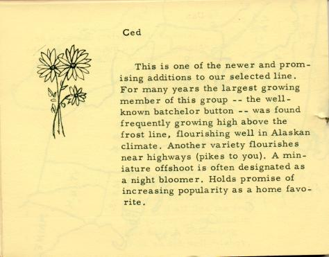 ADG - 1958 Christmas Card - Flower Show - pg. 5