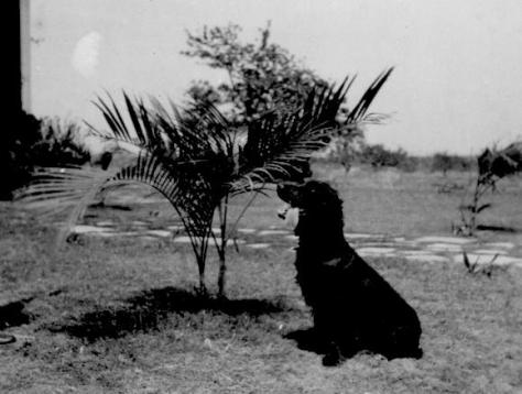 APG - Gringo, Flor and Martin Williams' dog - 1945
