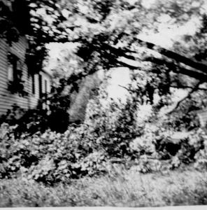 Trumbull House - (2) - Maple Tree in front of house - Sept., 1944