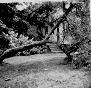 Trumbull House (3) - Apple Tree - Hurricane - Sept., 1944